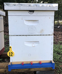 Monthly Rental - Single Deep Hive w/ 1 Med Super