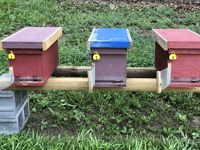 5 Frame Nucleus Hive Colony