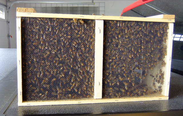3 lb Package of Honey Bees - 2019