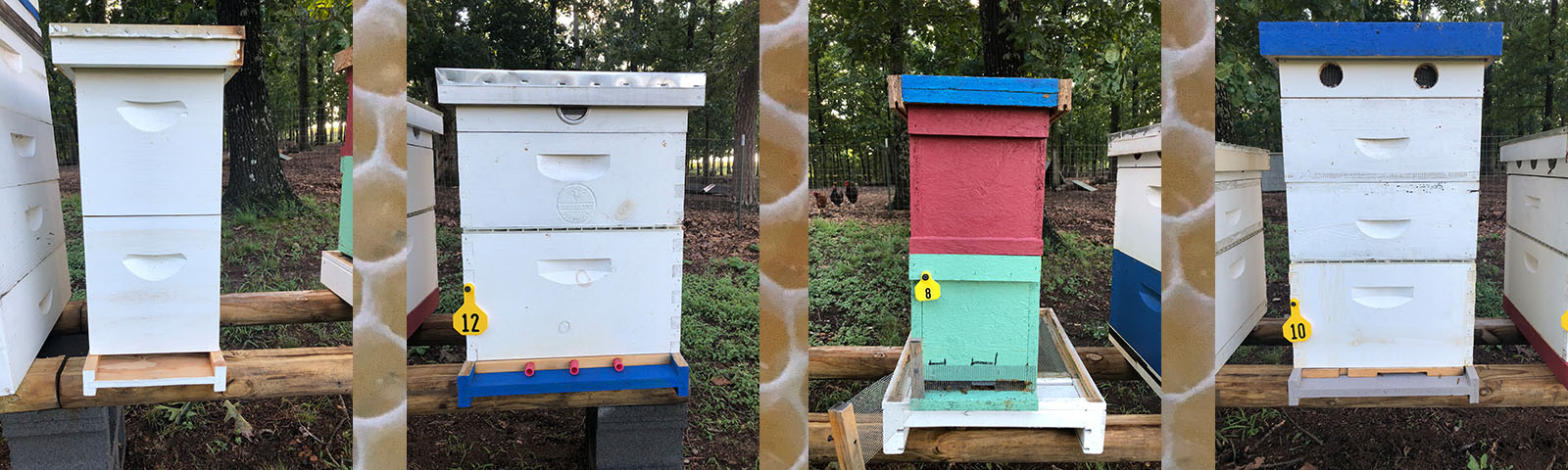 * * * * * * * * Beehive Rental available in 2019 * * * * * * *