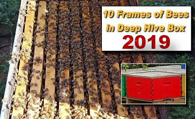 Limited Supply - 10 Frame Colony in a Deep Hive Box