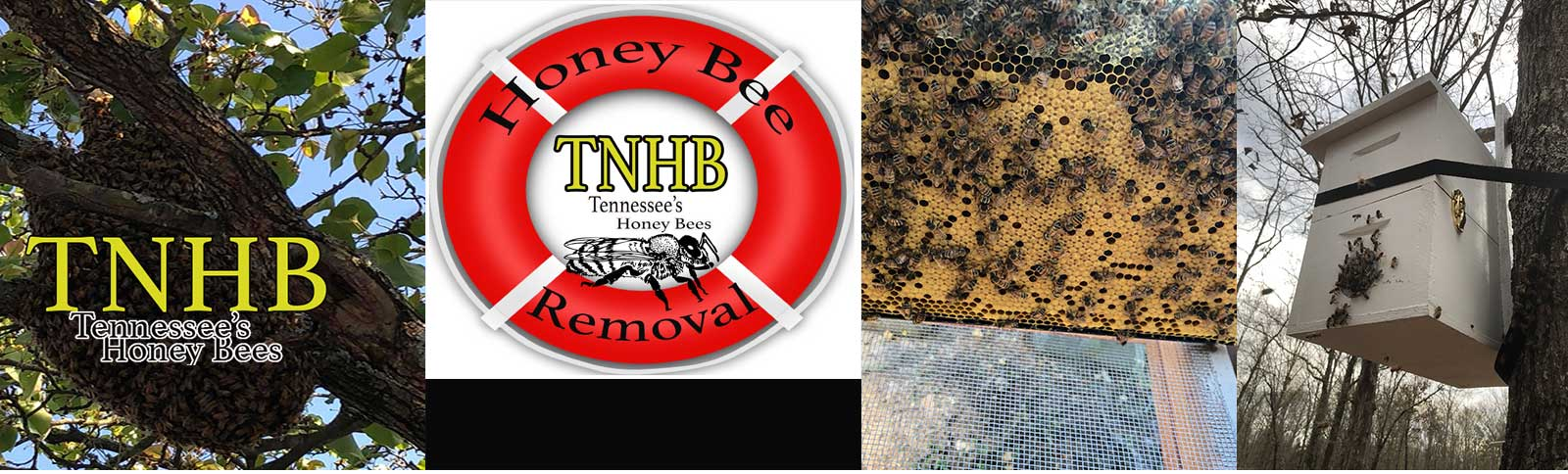 * * * * * * * Honey Bee Rescue / Removal Service * * * * * * * *